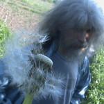 2009 – одуванчики